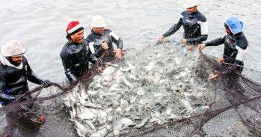 تعرف على أسعار السمك اليوم الأحد بالأسواق