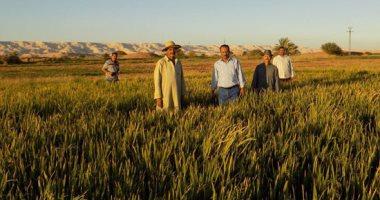 زراعة الزقازيق تحتفل بإنتاج أربعة أصناف من الأرز مقاومة للجفاف والملوحة